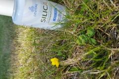 Silica в траве
