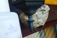 Осиное гнездо и Silica